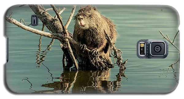 Galaxy S5 Case featuring the photograph Nutria On Stick-up by Robert Frederick