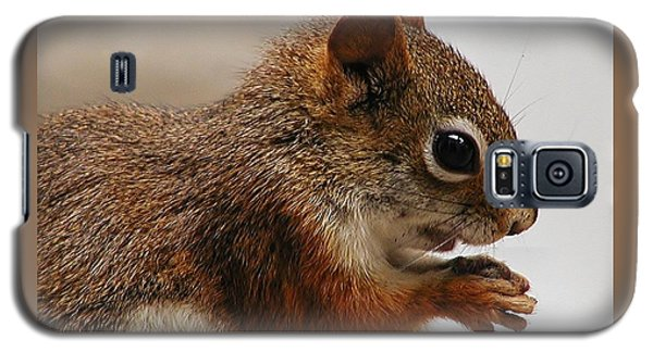 Galaxy S5 Case featuring the photograph Nutty Guy by Martha Ayotte
