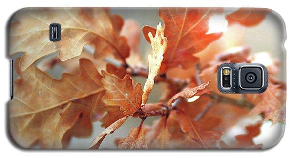Oak Leaves In Autumn Galaxy S5 Case