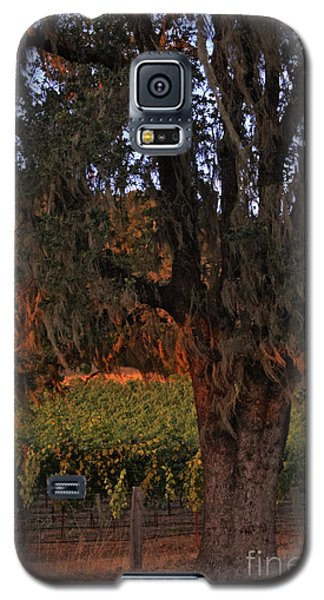 Oak Tree And Vineyards In Knight's Valley Galaxy S5 Case