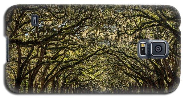 Oak Tree Tunnel Galaxy S5 Case