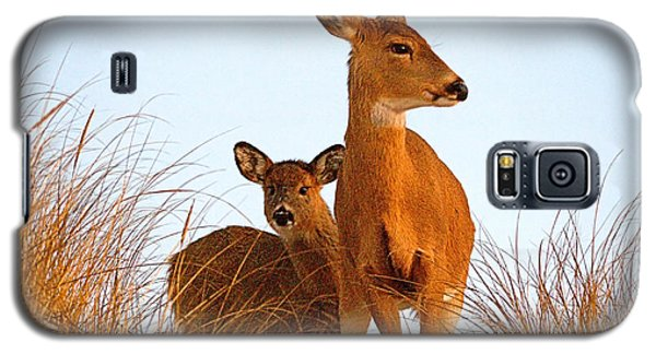 Ocean Deer Galaxy S5 Case