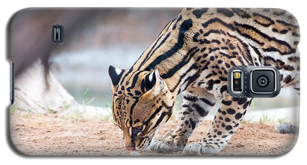 Ocelot And Egg Galaxy S5 Case