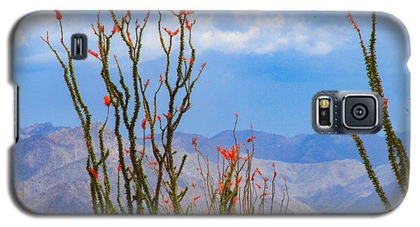 Ocotillo Cactus With Mountains And Sky Galaxy S5 Case