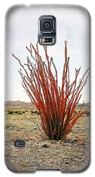 Ocotillo Plant Galaxy S5 Case