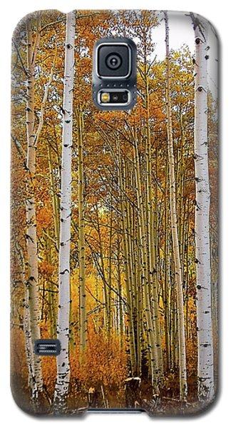 Galaxy S5 Case featuring the photograph October Aspen Grove  by Deborah Moen