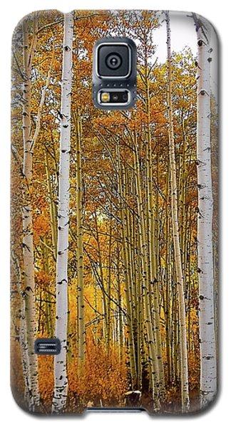 October Aspen Grove  Galaxy S5 Case by Deborah Moen