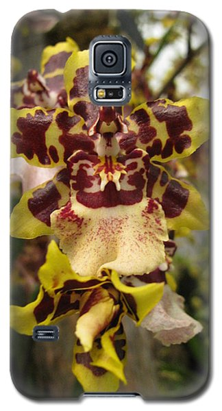 Galaxy S5 Case featuring the photograph Odontoglossum Orchid by Alfred Ng