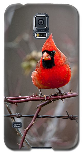 Of Barbs And Thorns Galaxy S5 Case