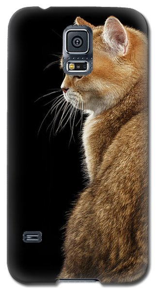 offended British cat Golden color Galaxy S5 Case