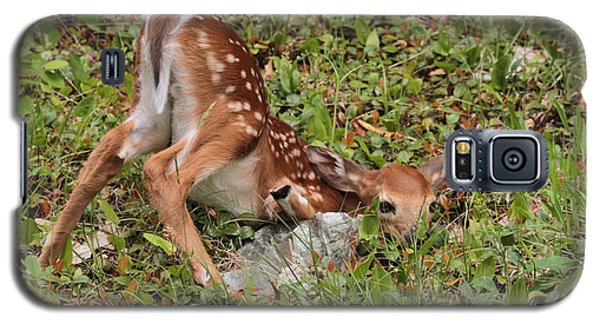 Oh Deer Little Fawn Galaxy S5 Case by Debbie Stahre