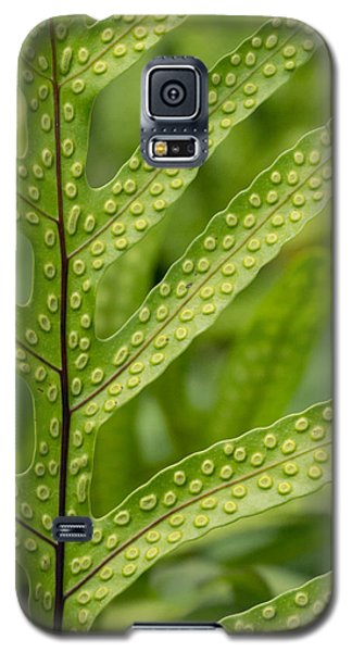 Galaxy S5 Case featuring the photograph Oh Fern by Christina Lihani