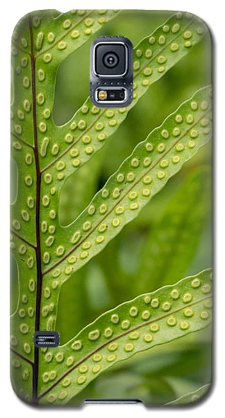 Oh Fern Galaxy S5 Case
