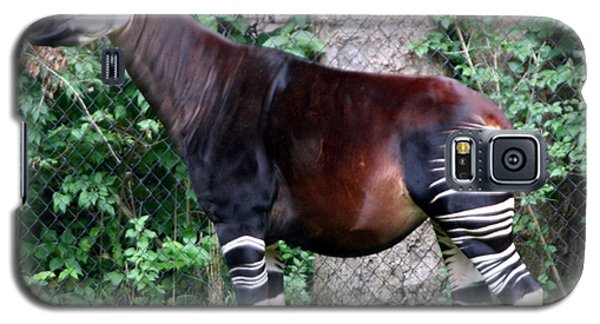 Okapi Galaxy S5 Case by Laurel Talabere
