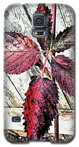 Old And  Faded Galaxy S5 Case