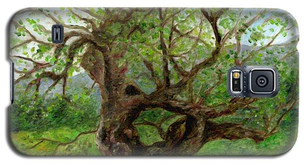 Old Apple Tree Galaxy S5 Case