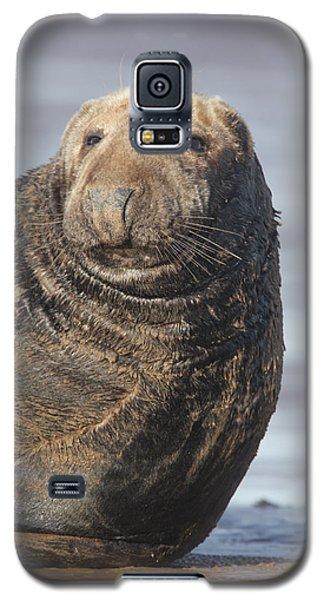 Old Atlantic Grey Seal On The Beach Galaxy S5 Case