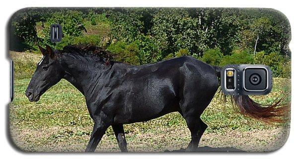 Old Black Horse Running Galaxy S5 Case