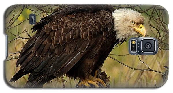 Old Eagle Galaxy S5 Case by Sheldon Bilsker