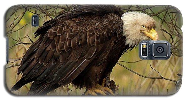 Old Eagle Galaxy S5 Case