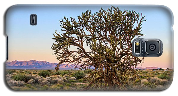 Old Growth Cholla Cactus View 2 Galaxy S5 Case