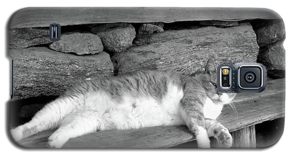 Galaxy S5 Case featuring the photograph Old Mill Cat by Sandi OReilly