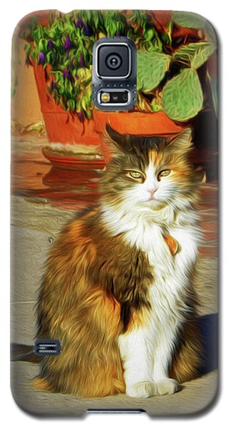 Galaxy S5 Case featuring the photograph Old Town Cat by Nikolyn McDonald