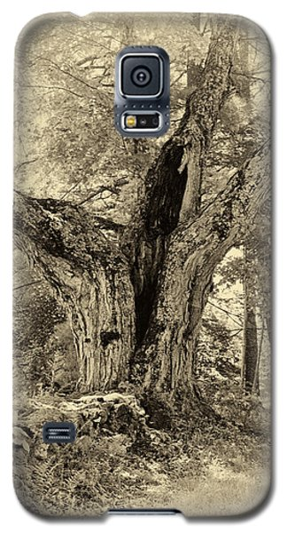 Old Tree  Galaxy S5 Case