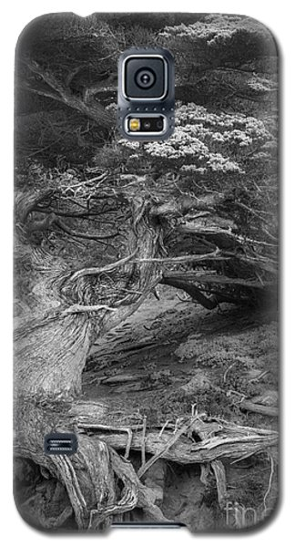 Galaxy S5 Case featuring the photograph Old Veteran by Alexander Kunz