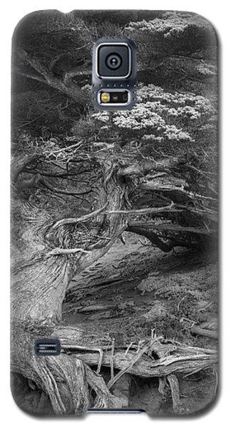 Old Veteran Galaxy S5 Case