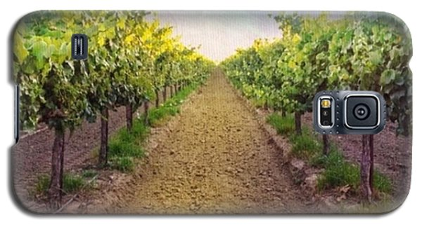 Food And Beverage Galaxy S5 Case - Old #vineyard Photo I Rescued From My by Shari Warren