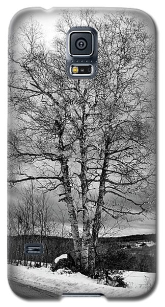Old White Birch Galaxy S5 Case
