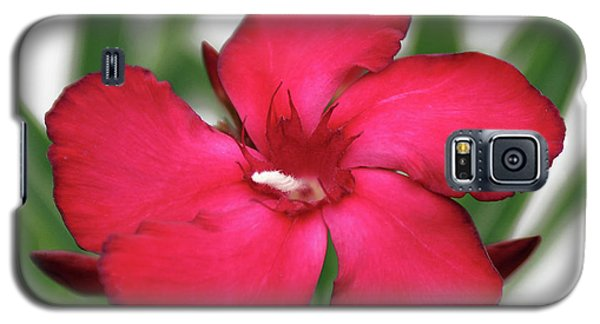 Galaxy S5 Case featuring the photograph Oleander Blood-red Velvet 1 by Wilhelm Hufnagl