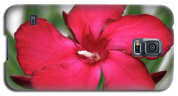 Oleander Blood-red Velvet 1 Galaxy S5 Case
