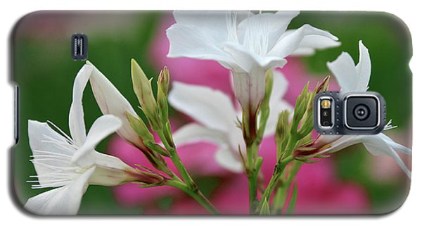 Galaxy S5 Case featuring the photograph Oleander Casablanca 1 by Wilhelm Hufnagl