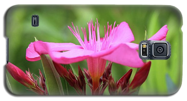 Galaxy S5 Case featuring the photograph Oleander Professor Parlatore 1 by Wilhelm Hufnagl