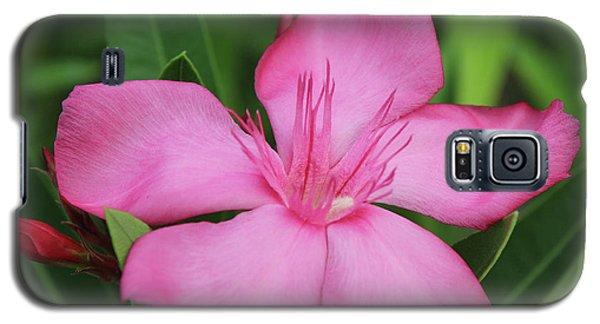 Oleander Professor Parlatore 2 Galaxy S5 Case