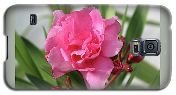 Galaxy S5 Case featuring the photograph Oleander Splendens Giganteum 1 by Wilhelm Hufnagl