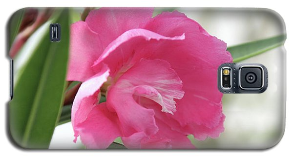 Galaxy S5 Case featuring the photograph Oleander Splendens Giganteum 3 by Wilhelm Hufnagl