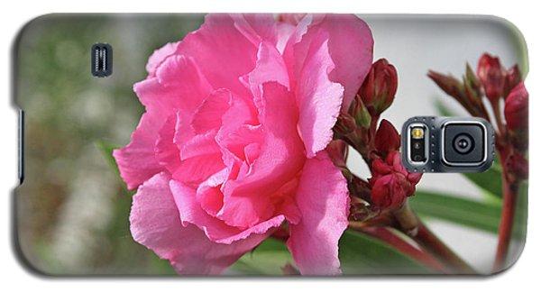 Oleander Splendens Giganteum 4 Galaxy S5 Case