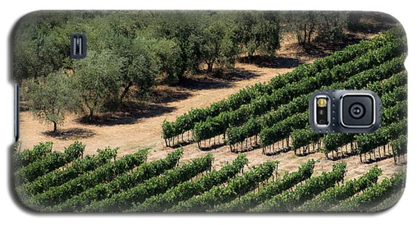 Olive Grove Meets Vineyard Galaxy S5 Case