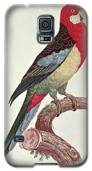 Omnicolored Parakeet Galaxy S5 Case