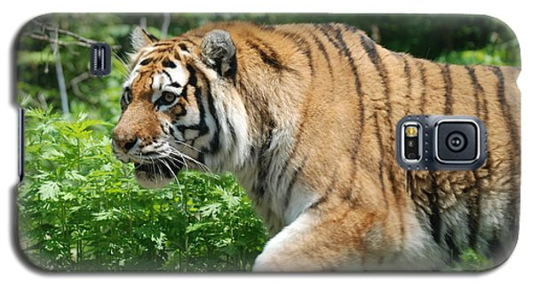 Galaxy S5 Case featuring the photograph On The Prowl by Richard Bryce and Family