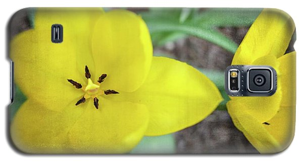 One And A Half Yellow Tulips Galaxy S5 Case by Michelle Calkins