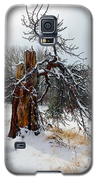 Galaxy S5 Case featuring the photograph One Branch Left by Shane Bechler