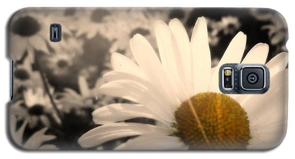 One Daisy Stands Out From The Bunch Galaxy S5 Case