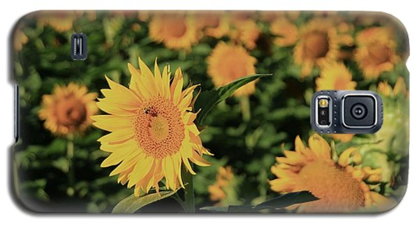 Galaxy S5 Case featuring the photograph One In A Million Sunflowers by Chris Berry