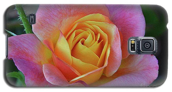 One Of Several Roses Galaxy S5 Case