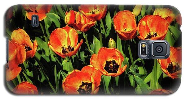 Tulip Galaxy S5 Case - Open Wide - Tulips On Display by Tom Mc Nemar