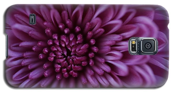 Galaxy S5 Case featuring the photograph Purple Mum by Glenn Gordon